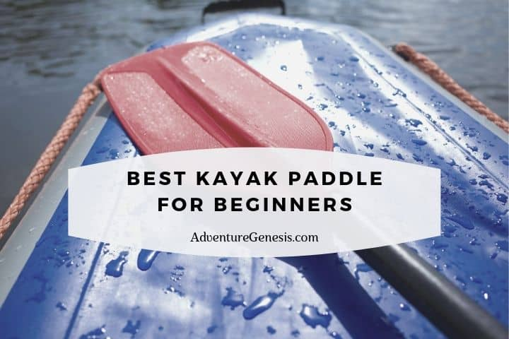 Best Kayak Paddle for Beginners